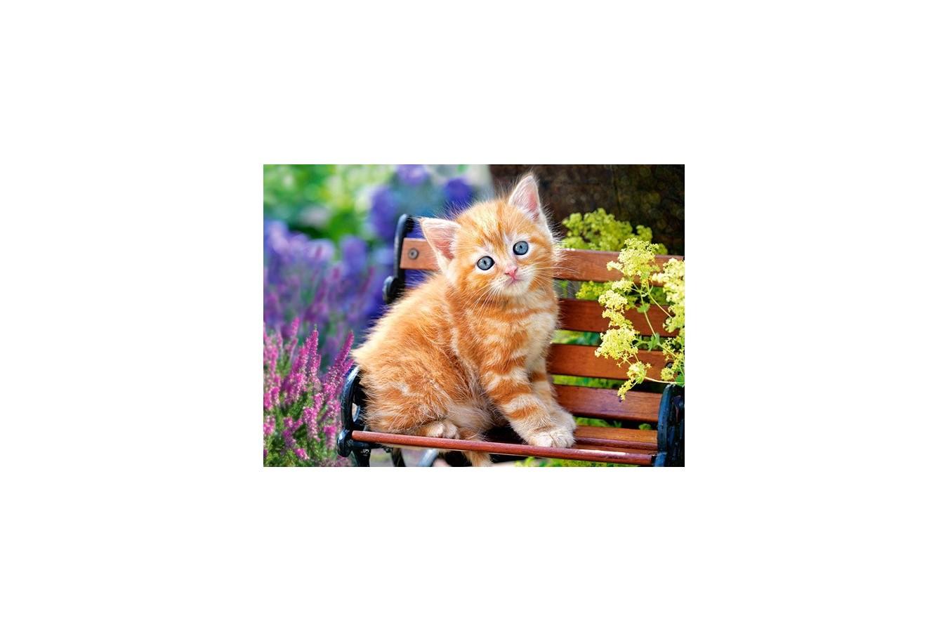 Puzzle Castorland - Ginger Kitten, 180 Piese