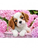 Puzzle Castorland - Pup In Pink Flowers, 180 Piese