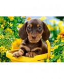 Puzzle Castorland - Puppy In Yellow, 180 Piese