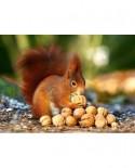 Puzzle Castorland - Squirrel In Paradise, 180 Piese