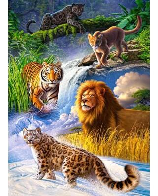 Puzzle Castorland - Big Cats, 260 Piese