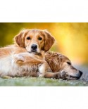 Puzzle Castorland - Friendship Forever, 260 Piese