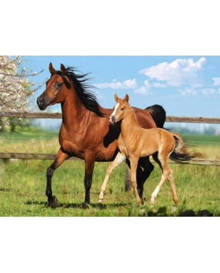 Puzzle Castorland - Mare And Foal, 260 Piese
