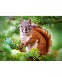 Puzzle Castorland - Pine Squirrel, 260 Piese