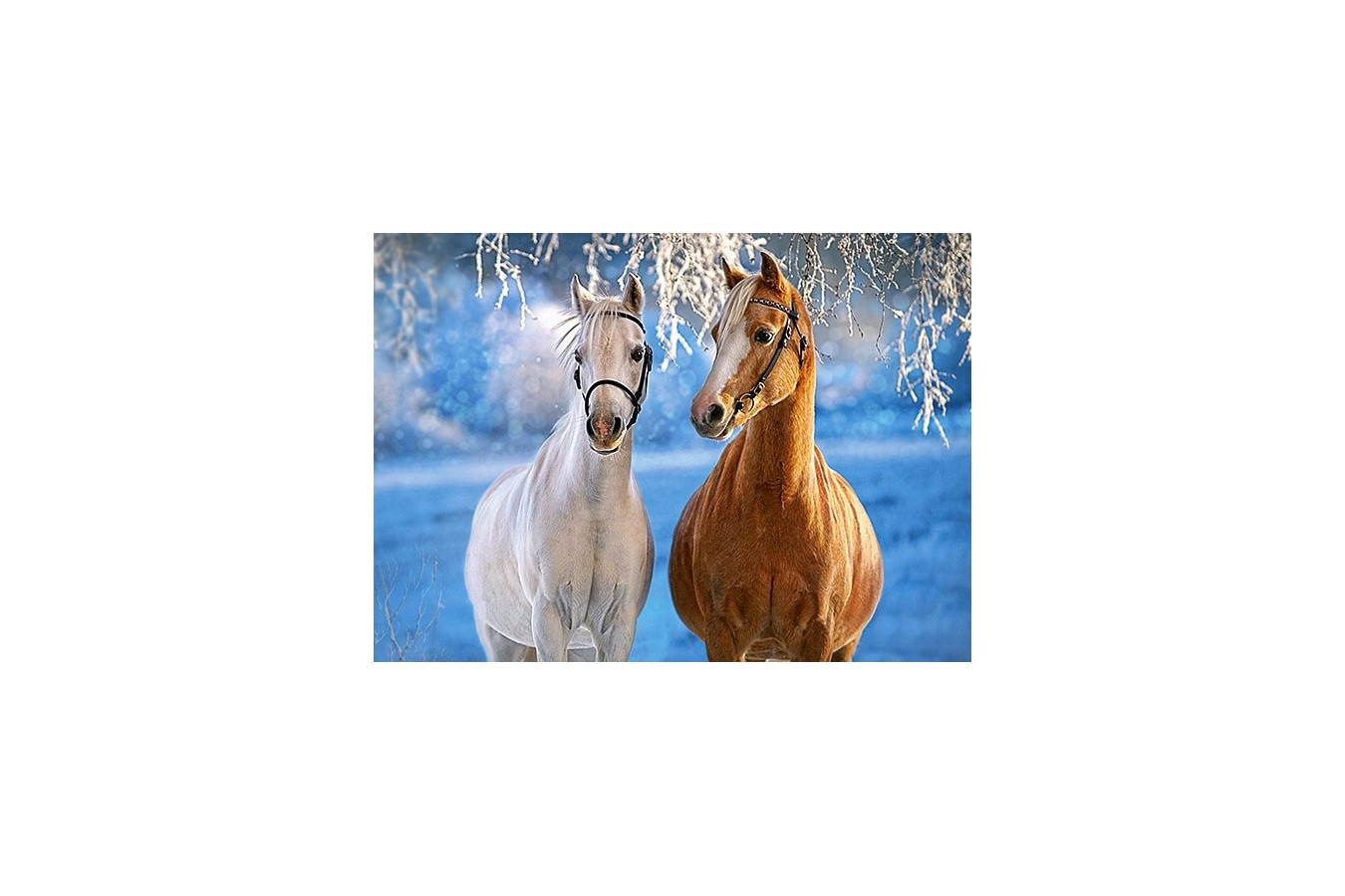 Puzzle Castorland - The Winter Horses, 260 Piese