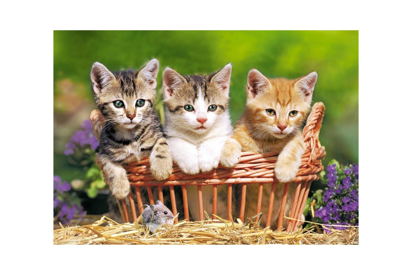 Puzzle Castorland - Three Lovely Kittens, 500 Piese