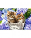 Puzzle Castorland - Cute Kittens, 1500 Piese