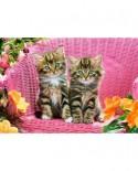 Puzzle Castorland - Kittens on garden chair, 1000 piese