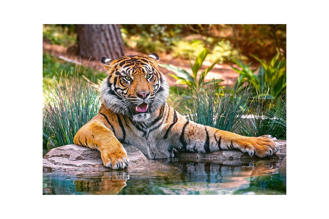Puzzle Castorland - Sumatran tiger, 500 piese