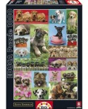 Puzzle Educa - Little Dogs, 1000 piese (14441)
