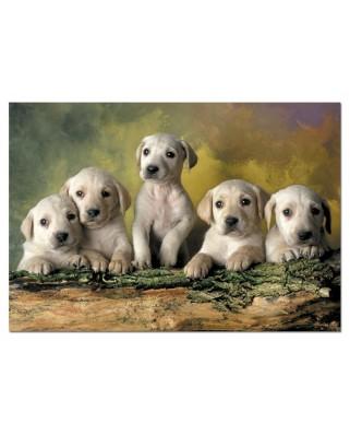 Puzzle Educa - Labrador Puppies, 500 piese (14802)
