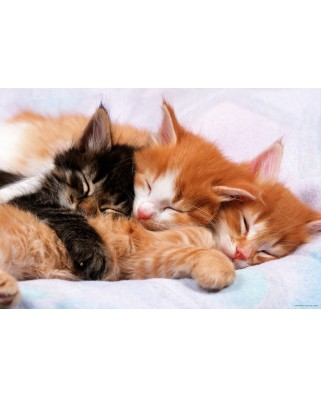 Puzzle Educa - Kittens, 500 piese, include lipici puzzle (17087)