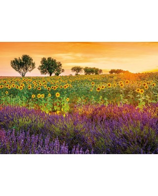 Puzzle Educa - Field of sunflowers and lavender, 1500 piese, include lipici puzzle (17669)