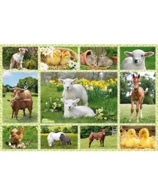 Puzzle Schmidt - Puii animalelor domestice, 100 piese (56194)
