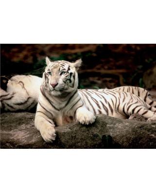 Puzzle Trefl - Bengal Tiger, 1.500 piese (755)