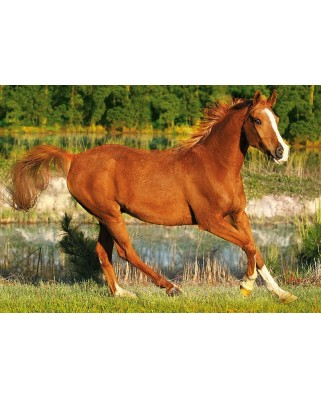 Puzzle Trefl - Galloping horse, 500 piese (40482)