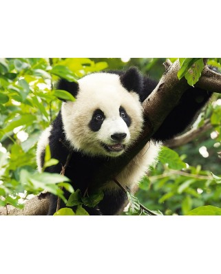 Puzzle Trefl - Giant Panda, 500 piese (11355)