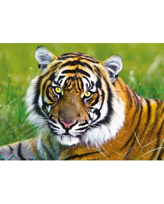Puzzle Trefl - Tiger, 500 piese (45487)