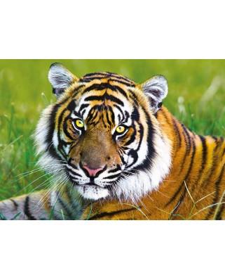 Puzzle Trefl - Tiger, 500 piese (45487)