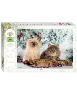 Puzzle Step - Cats, 1.000 piese (60281)