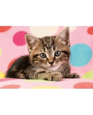 Puzzle Schmidt - Cute Kitten, 100 piese (56249)