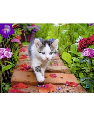 Puzzle Nathan - Kitten, 500 piese (62523)