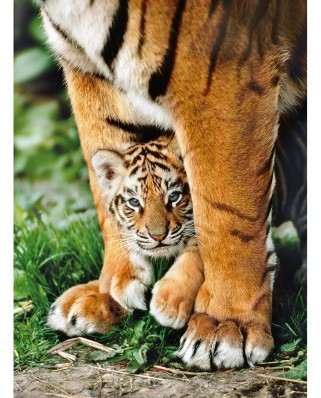 Puzzle Clementoni - Bengal Tiger Baby, 500 piese (65243)