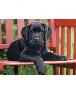 Puzzle Clementoni - Black Puppy, 500 piese (12471)