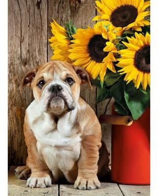 Puzzle Clementoni - Bulldog, 1.000 piese (60892)