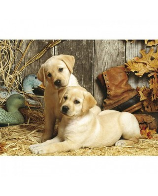Puzzle Clementoni - Curious Puppies, 1500 piese (4843)