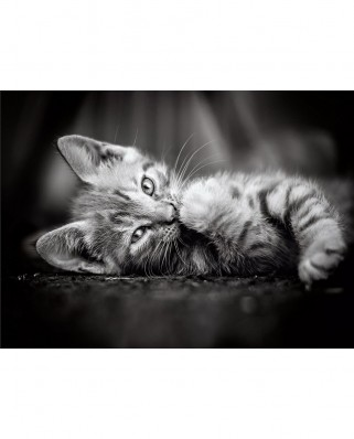 Puzzle Clementoni - Kitten, 1.000 piese alb-negru (62407)