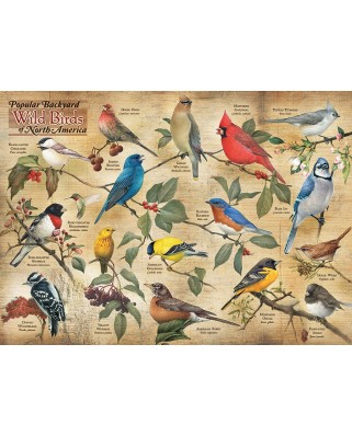 Puzzle Cobble Hill - Popular Backyard Wild Birds of N.A., 1000 piese (64970)