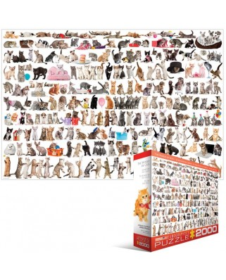 Puzzle Eurographics - Cat, 2000 piese (8220-0580)