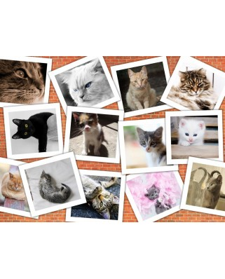 Puzzle Grafika - Cats, 2.000 piese (59653)