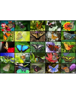 Puzzle Grafika - Collage - Butterflies, 1000 piese (52515)