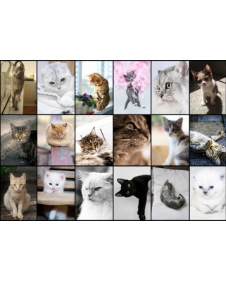 Puzzle Grafika - Collage - Cats, 1.000 piese (52580)