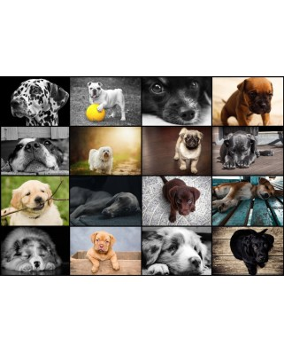Puzzle Grafika - Collage - Dogs, 1.000 piese (52509)