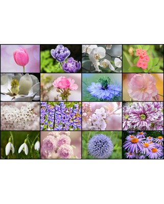 Puzzle Grafika - Collage - Spring Flowers, 1000 piese (52511)