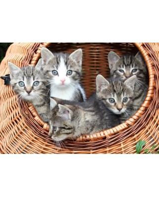Puzzle Grafika - Kittens in a Basket, 1.000 piese (53032)
