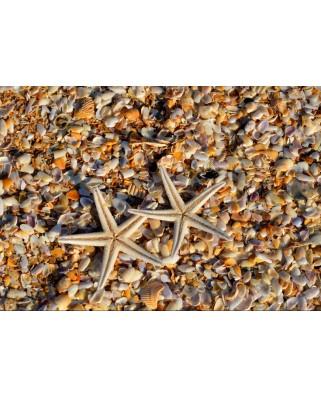 Puzzle Grafika - Shells and Starfish, 1.000 piese dificile (55879)