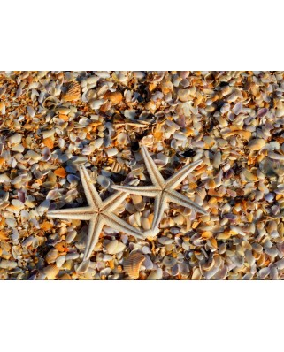 Puzzle Grafika - Shells and Starfish, 2.000 piese dificile (55878)