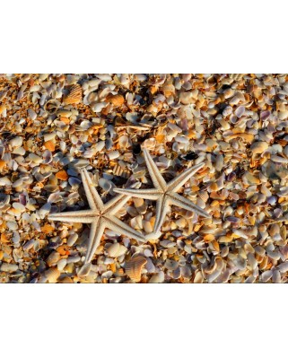 Puzzle Grafika - Shells and Starfish, 300 piese dificile (55880)