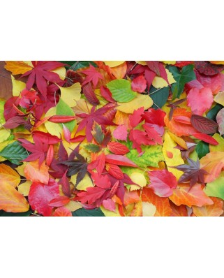 Puzzle Grafika Kids - Autumn Leaves, 100 piese (55680)