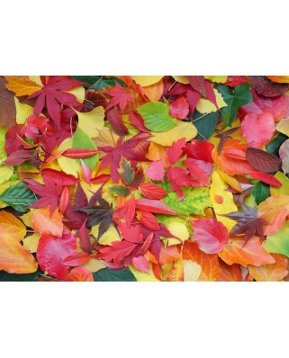 Puzzle Grafika Kids - Autumn Leaves, 24 piese (55682)