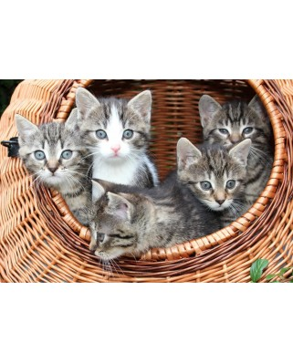 Puzzle Grafika Kids - Kittens in a Basket, 100 piese (53034)