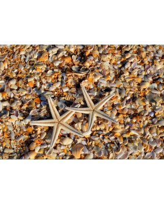 Puzzle Grafika Kids - Shells and Starfish, 100 piese dificile (55881)