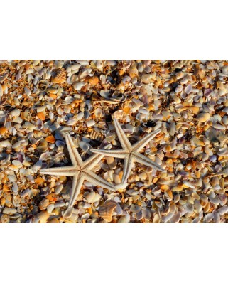 Puzzle Grafika Kids - Shells and Starfish, 24 piese dificile (55883)