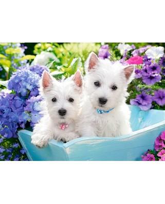 Puzzle Castorland - Westie Puppies, 60 piese (66100)
