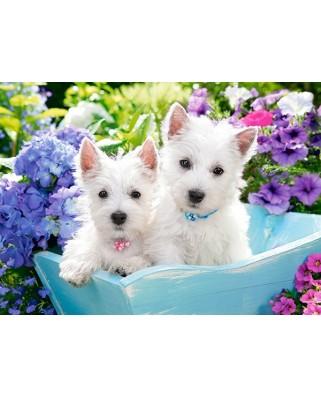 Puzzle Castorland - Westie Puppies, 200 piese (222032)