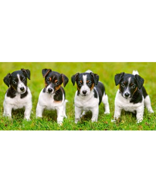 Puzzle panoramic Castorland - Jack Russell Terrier Puppies, 600 piese (60337)